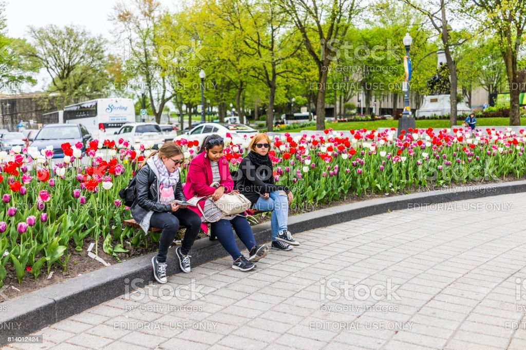 Tulip flowers and people sitting on bench in summer by roundabout...