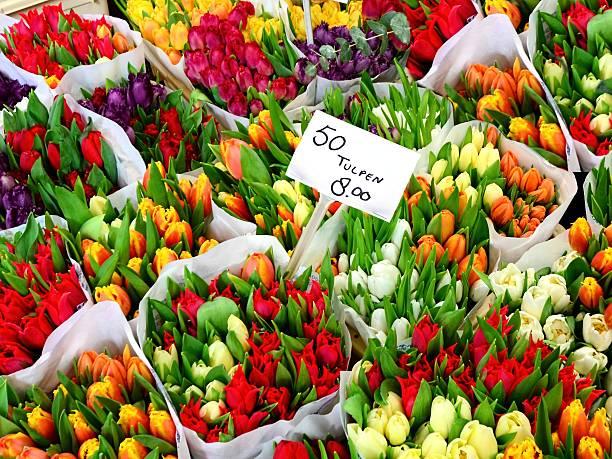 tulpe blumen für den verkauf in einer niederländischen blumenmarkt - günstig nach amsterdam stock-fotos und bilder