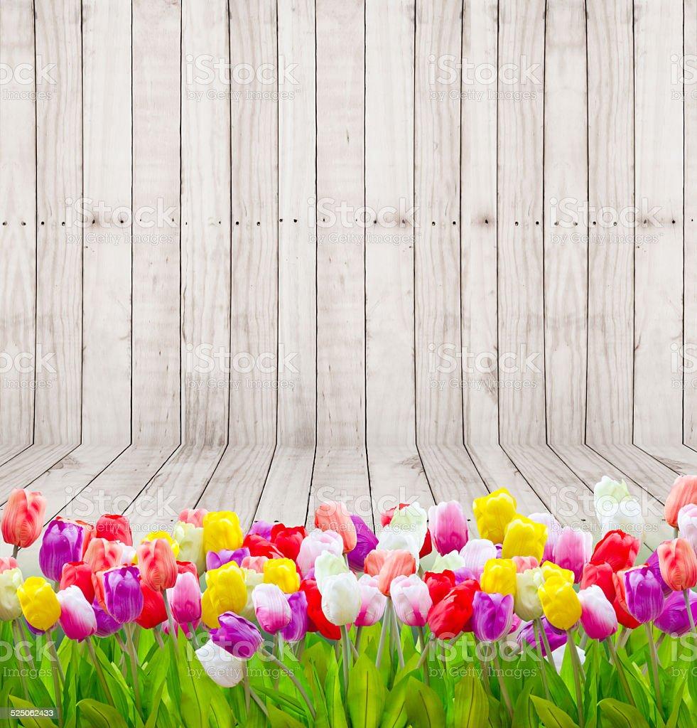 Tulip flowers  on wooden wallpaper. stock photo
