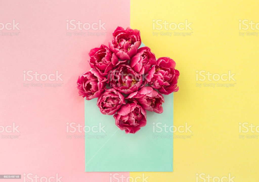 Tulip flowers Pink blossoms yellow paper stock photo