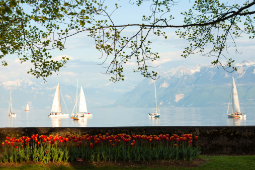 tulip garden in front of lac leman