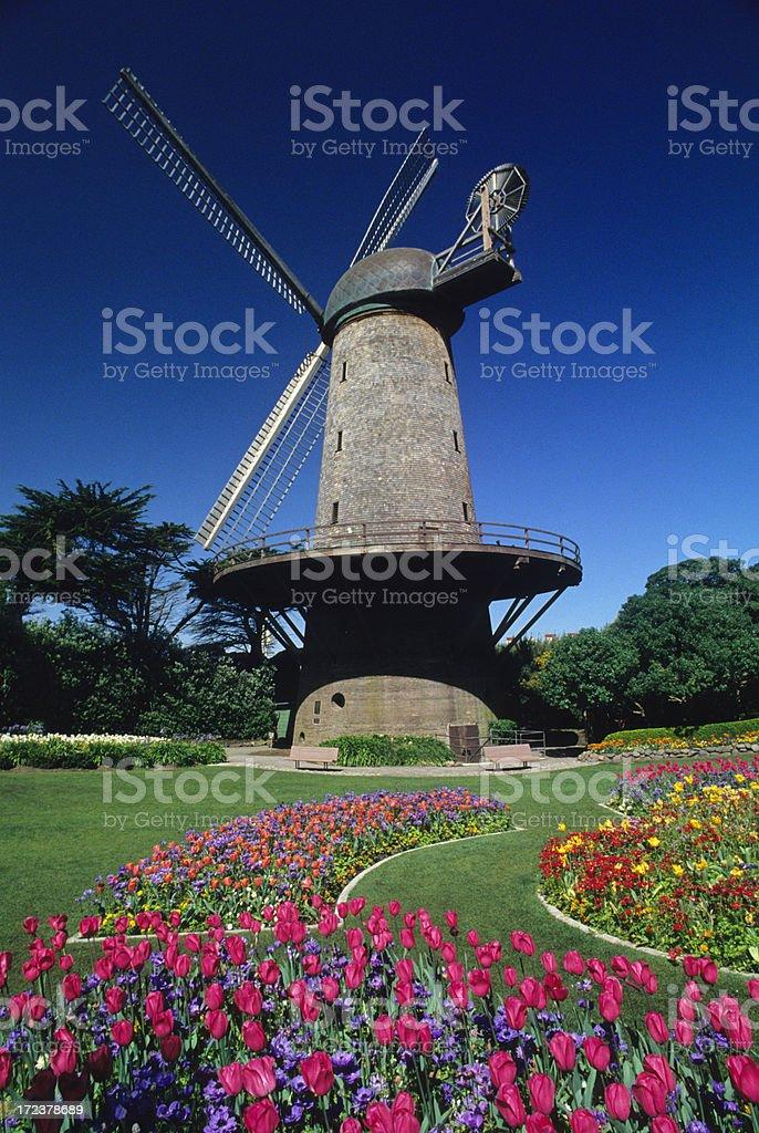 Tulip Gardens and Windmill stock photo