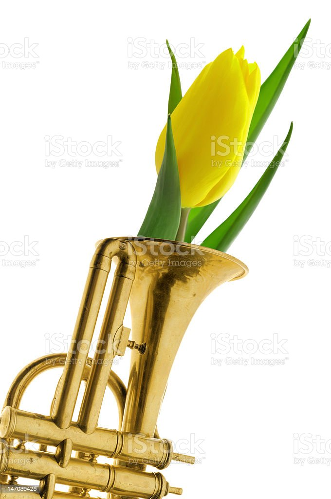 Tulip in gold trumpet royalty-free stock photo