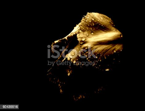istock Tulip in the rain [4] 92435516