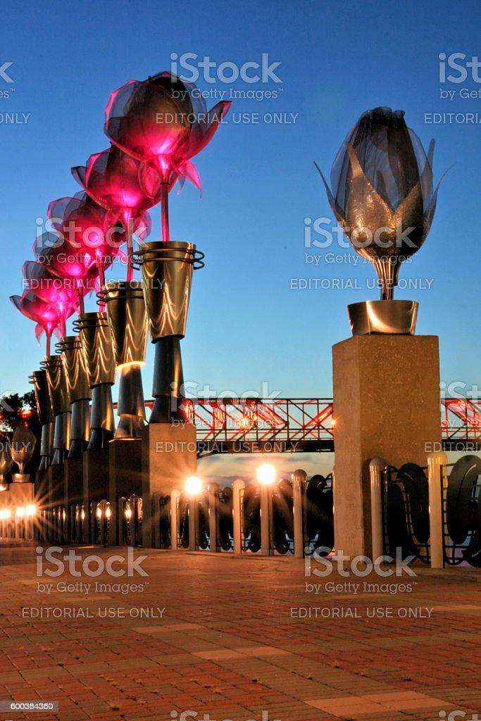 Tulip Lights at Riverfront stock photo