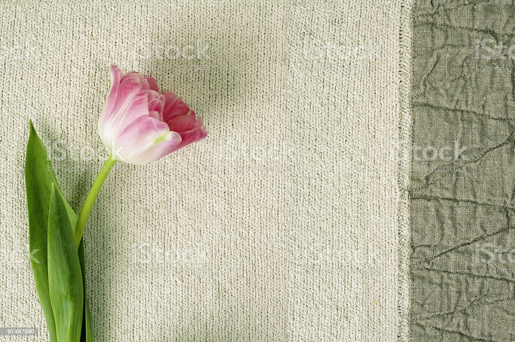 tulip on a linen fabric royalty-free stock photo