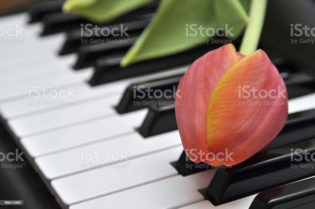 Tulipano sul Piano foto stock royalty-free
