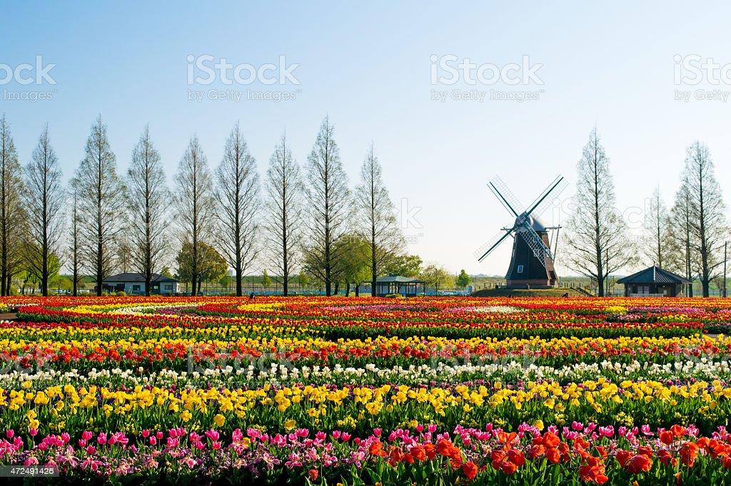 Tulip park stock photo