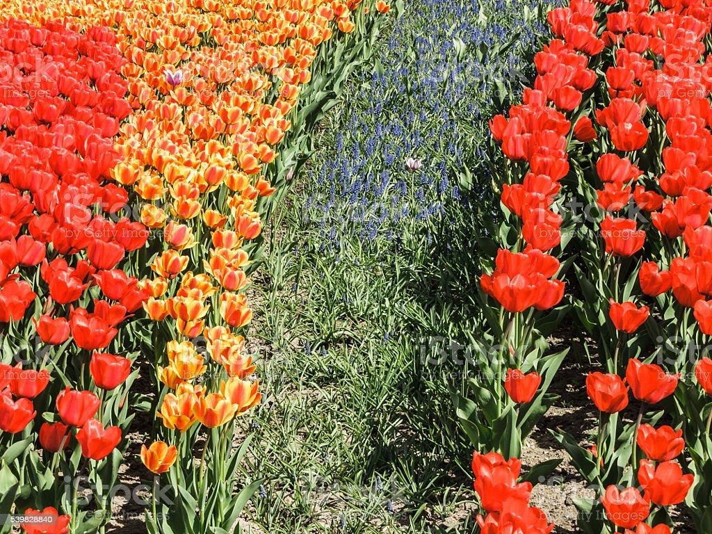 Тюльпан Парк стоковое фото