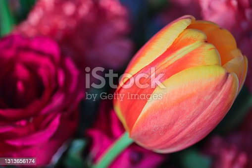 Colorful tulip and roses