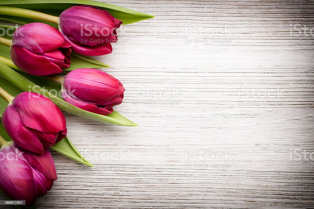 Tulip. stock photo