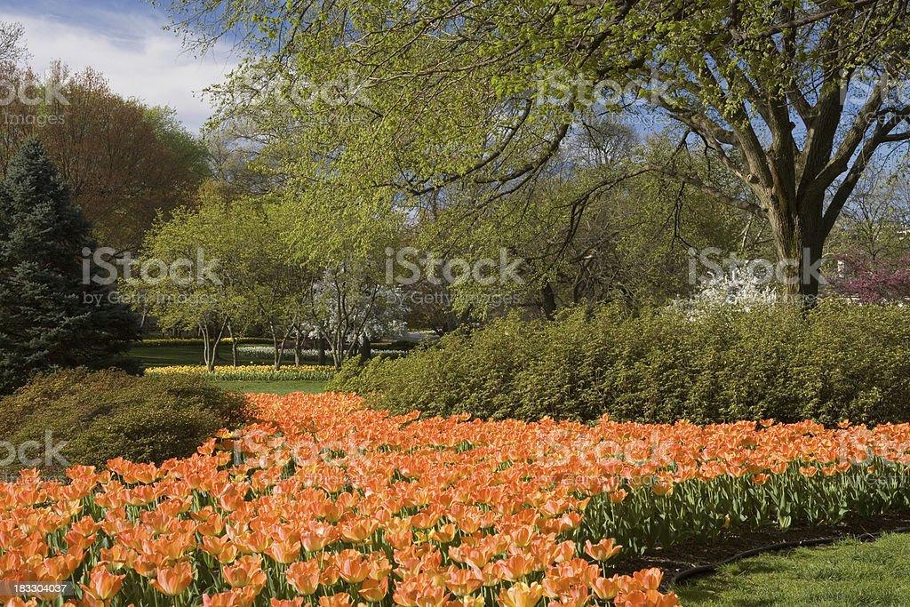 Tulip River royalty-free stock photo