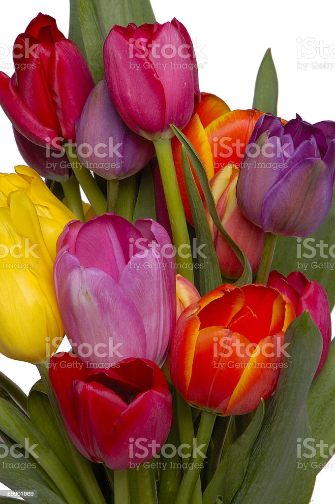 Tulips Again royalty-free stock photo