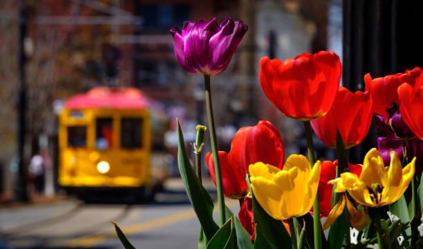 Tulpen und ein Trolley in Little Rock – Foto
