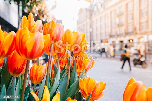 Close up view of Holland red and orange tulip flowers with green leafs on street of Amsterdam, Netherlands.