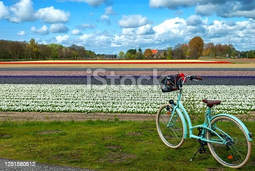 View of a tulips field and bike on the first floor with copy space
