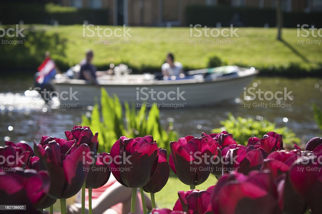 Tulips and boat in Holland stock photo