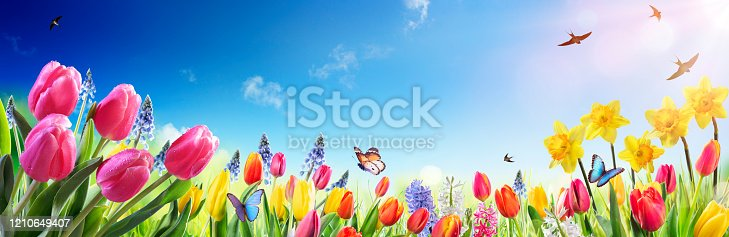 istock Tulips And Daffodils In Sunny Field - Spring flowers 1210649407