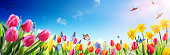 Tulips And Daffodils With Sunlight - Spring flowers