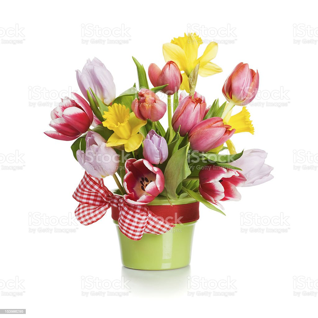 Tulips and Daffodils stock photo