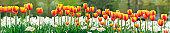 Flowers, a set of various flowers. Flat design, vector illustration, vector.