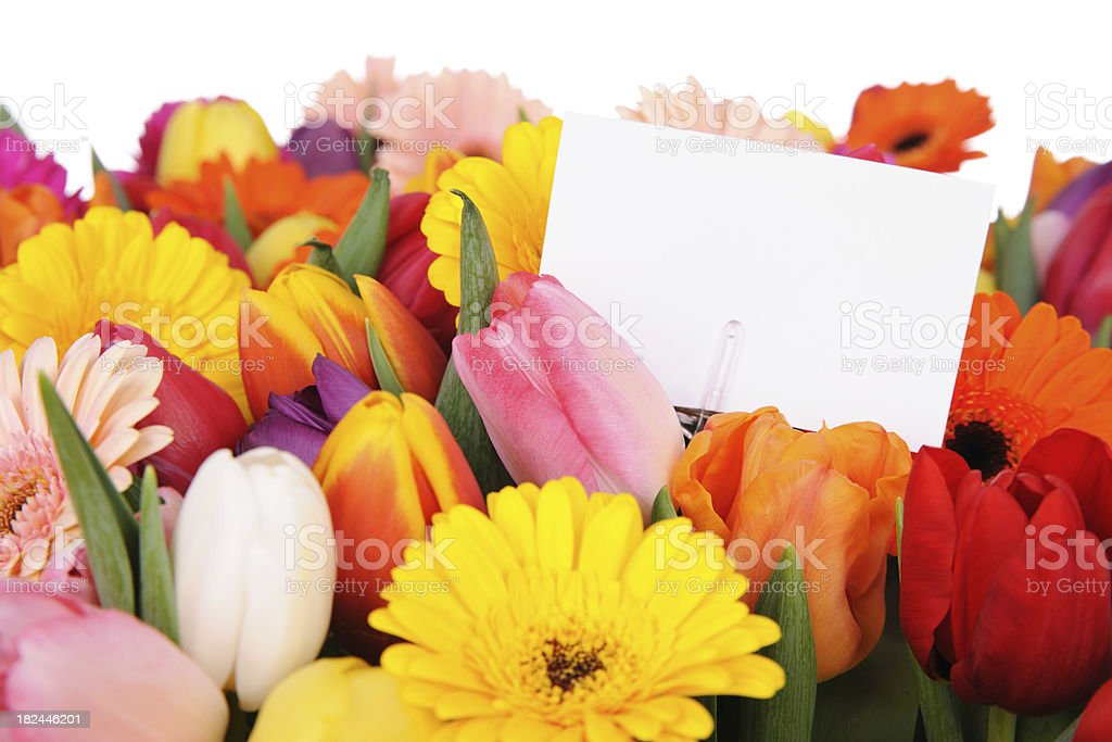 Tulips and daisies with white card royalty-free stock photo