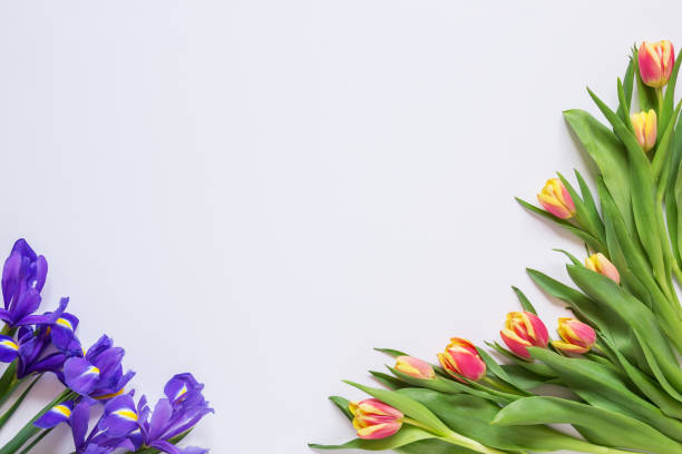 Cтоковое фото Tulips and irises on a white background, blank