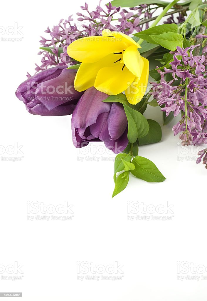 Tulips and Lilac on White Background royalty-free stock photo