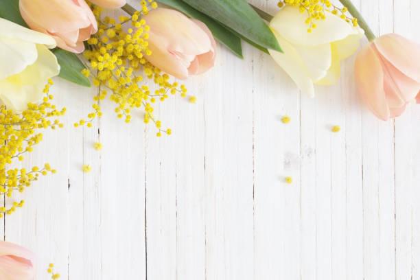 tulips and mimosa on white wooden background - immagini mimosa 8 marzo foto e immagini stock