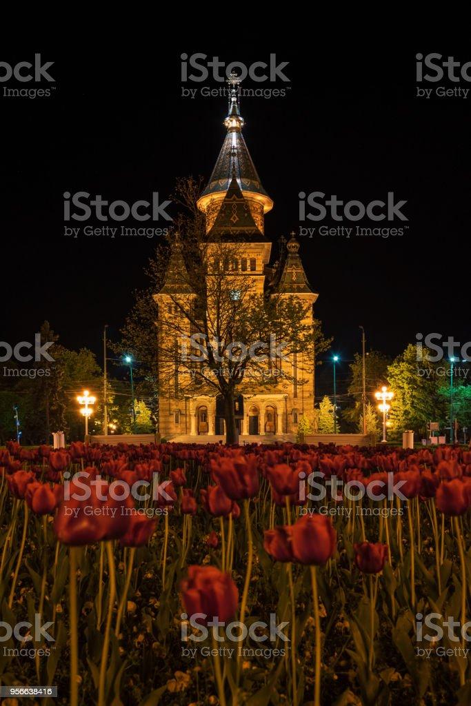 Tulipes et Cathédrale orthodoxe de Timisoara, Roumanie - Photo