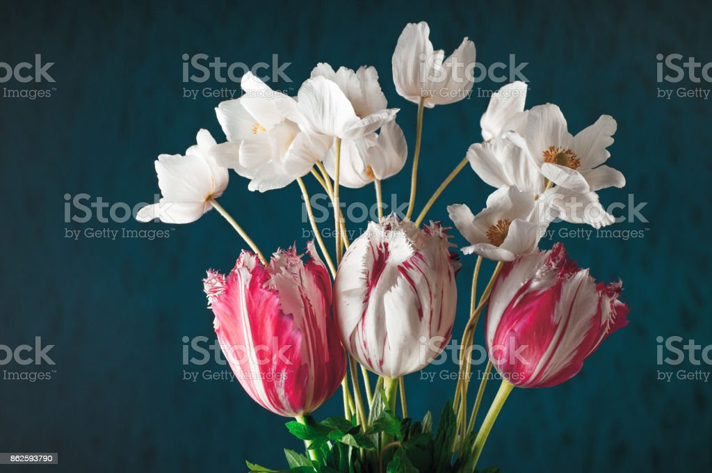 Tulips and white anemones with green leaves stock photo