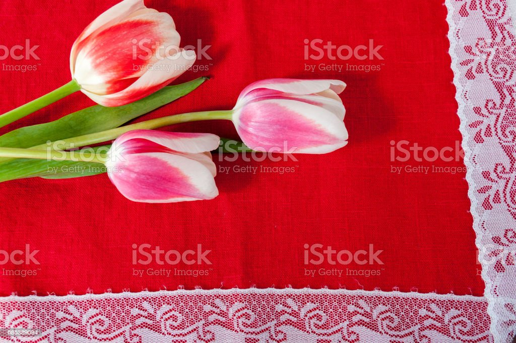 Tulips and white braid on a red background foto de stock libre de derechos
