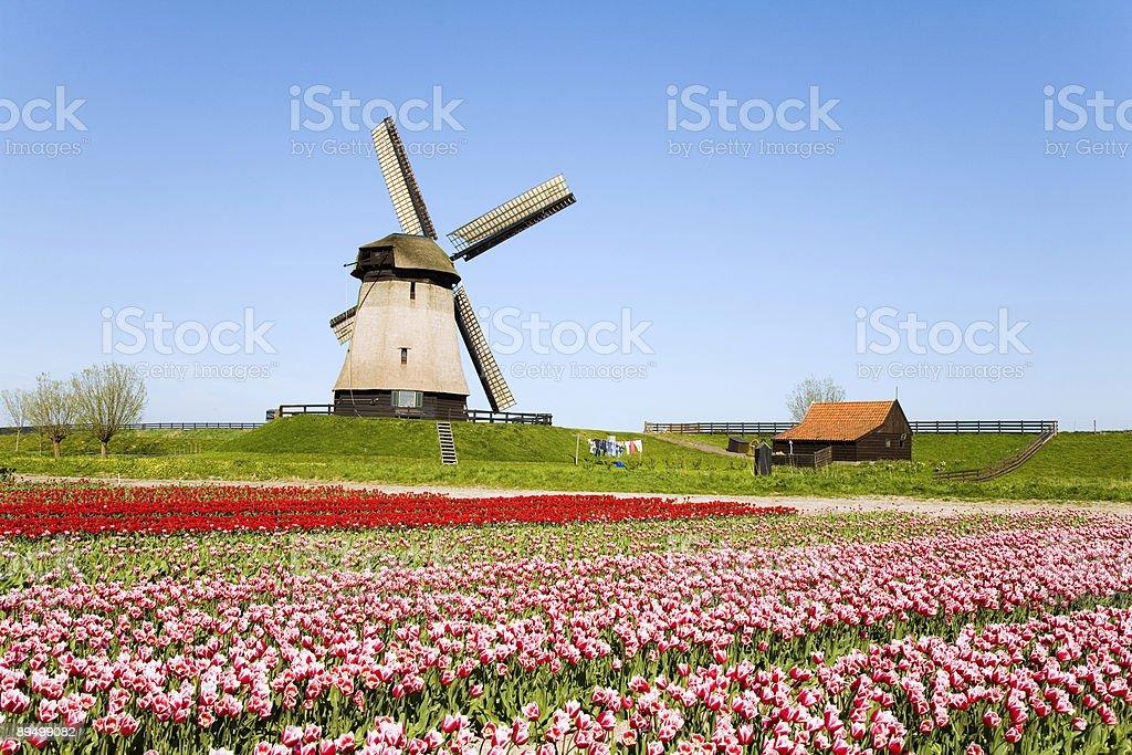Tulipani e Mulino a vento 5 foto stock royalty-free