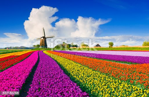 Colorful tulip field in front of a Dutch windmill under a nicely clouded sky.