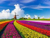 istock Tulips and Windmills 613319258
