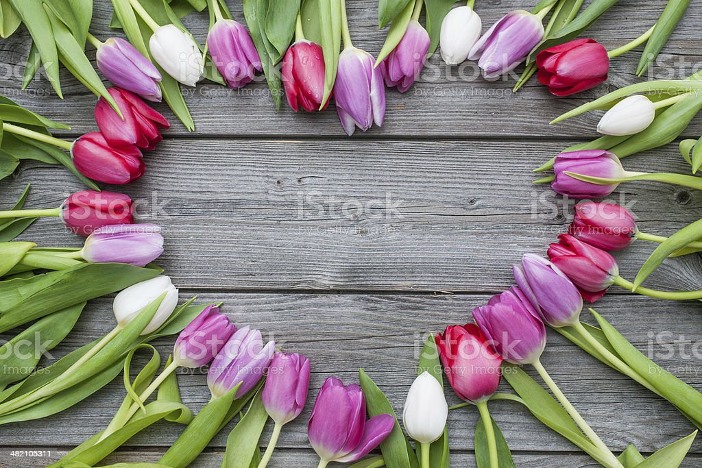 Tulips arranged on old wooden background stock photo