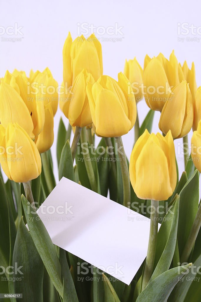 Tulips as gift royalty-free stock photo
