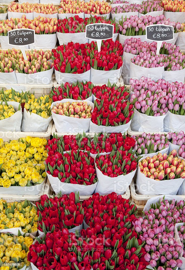 Tulips at Flower Market in Amsterdam stock photo