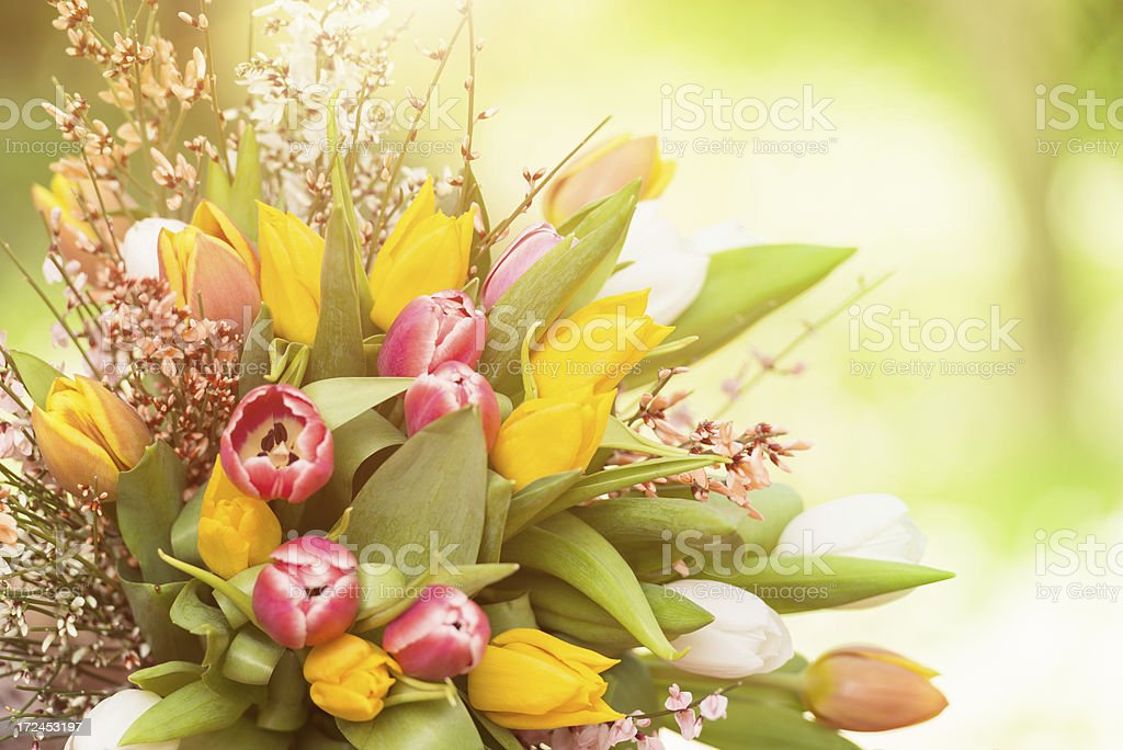 tulips bouquet of flowers royalty-free stock photo