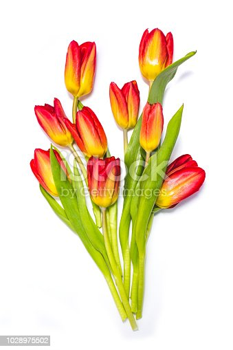 Red and yellow tulip flowers bouquet isolated on white background