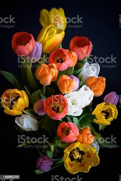 Tulips bouquet picture id146955255?b=1&k=6&m=146955255&s=612x612&h=cajr7ggphqle5rlskg0uq42iwg36fzaqazc2g9cxpni=