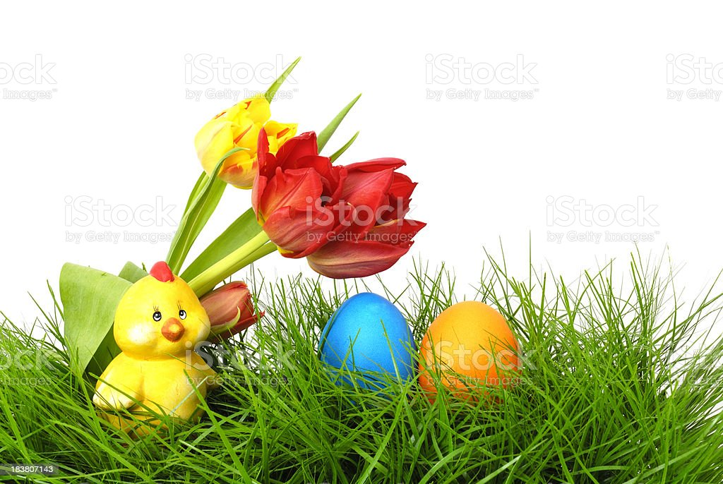 Tulips, chicken and easter eggs royalty-free stock photo