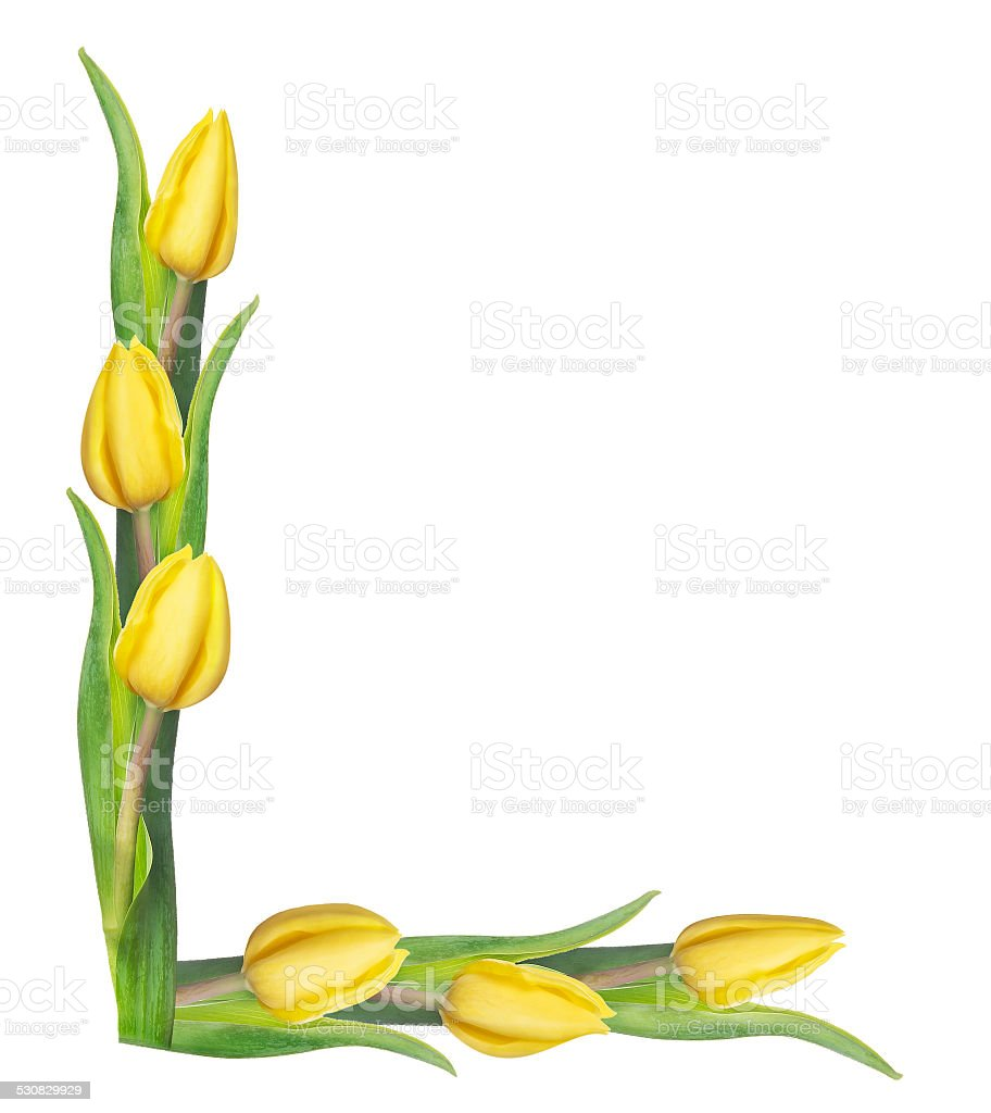 Tulips Corner Border Isolated On White Background Royalty Free Stock Photo