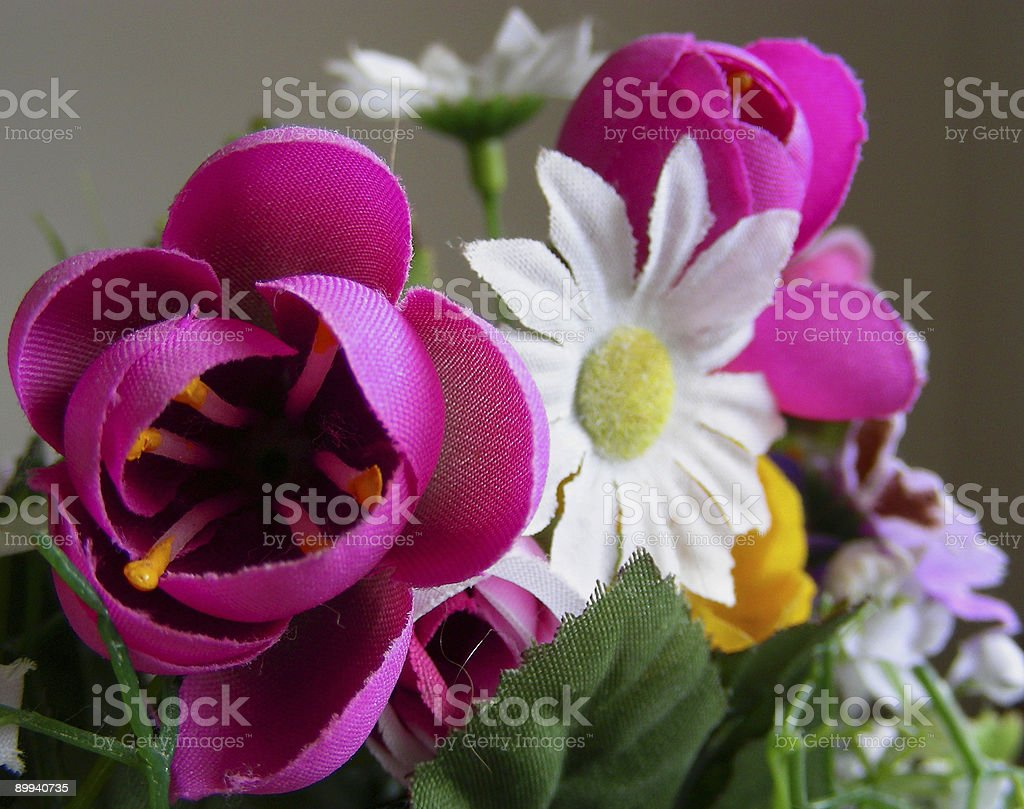 Tulips & Daisies royalty-free stock photo