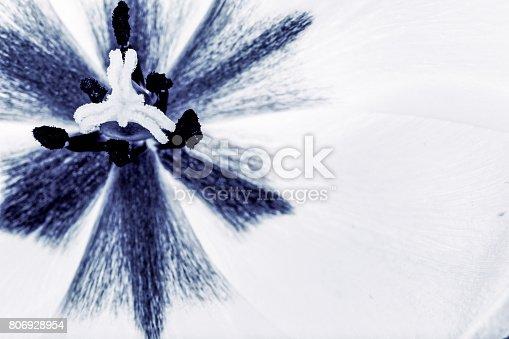 652288118istockphoto tulips flowers background 806928954