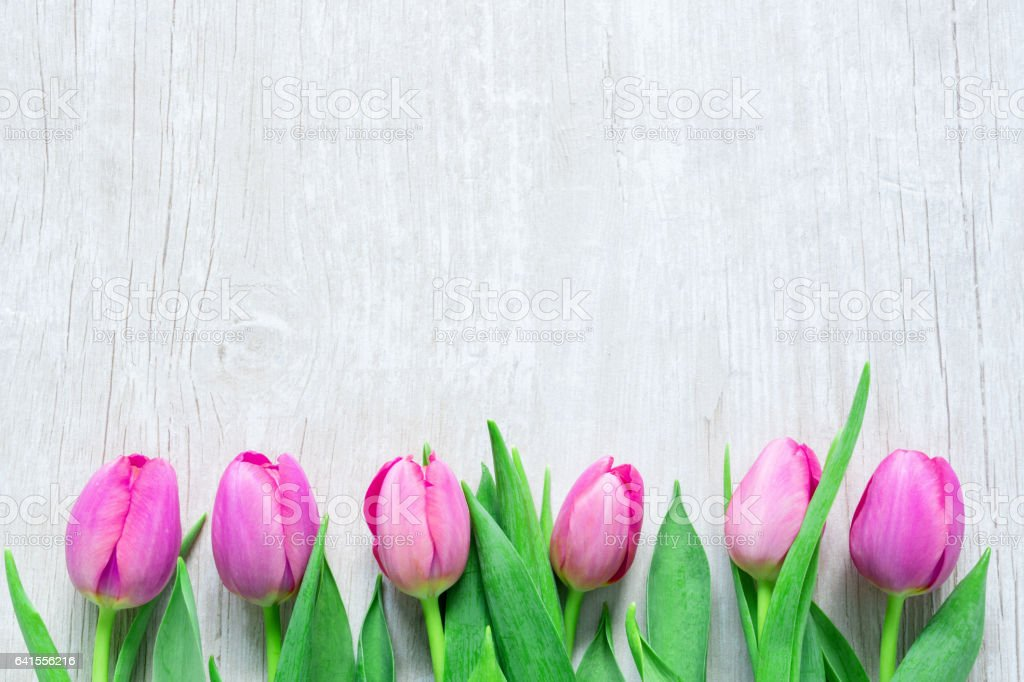 Tulips Flowers in a row  on wooden table stock photo