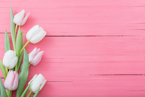 tulips flowers on pink wooden background