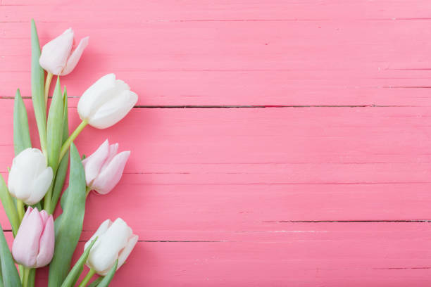 Tulips flowers on pink wooden background picture id1137337430?b=1&k=6&m=1137337430&s=612x612&w=0&h=yaatmbsrhvn9r9alg6npndklmti1uht9kl6zmtczhki=