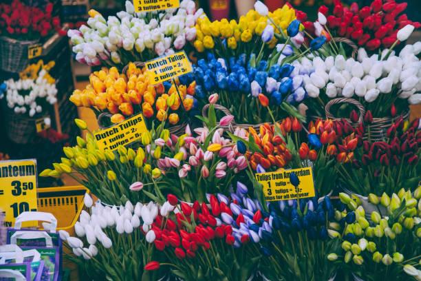 tulpen in amsterdam zu verkaufen - günstig nach amsterdam stock-fotos und bilder