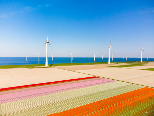 Tulips growing in agricutlural fields with wind turbines in the background during springtime seen from above stock photo